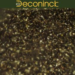 Chenevis amorce graines Deconinck 10kg (2€69/kg)